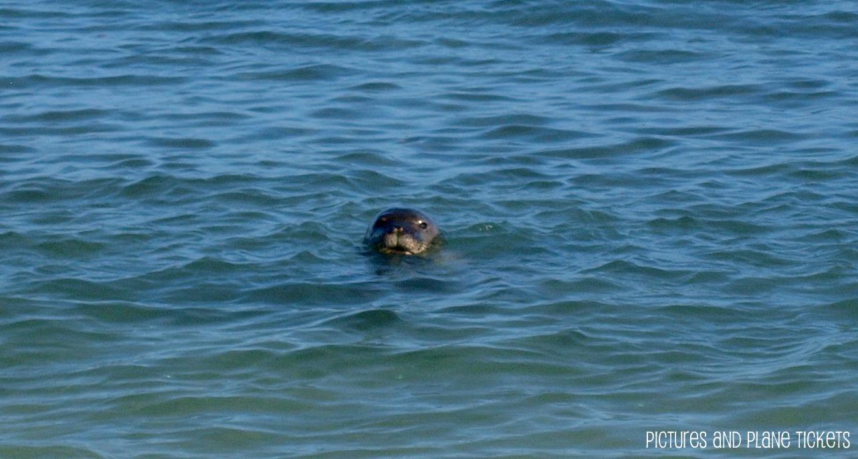 Sea Lion 4