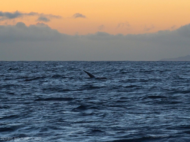 Kauai Whales