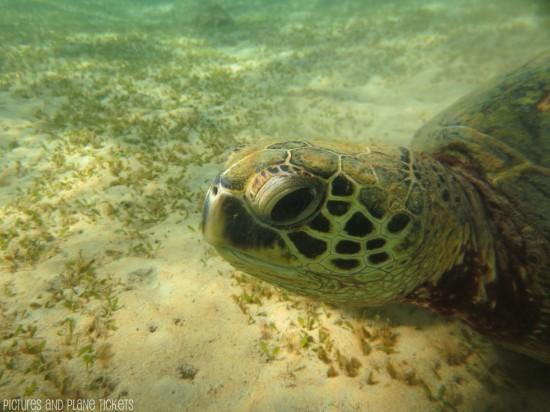 Kauai Turtles