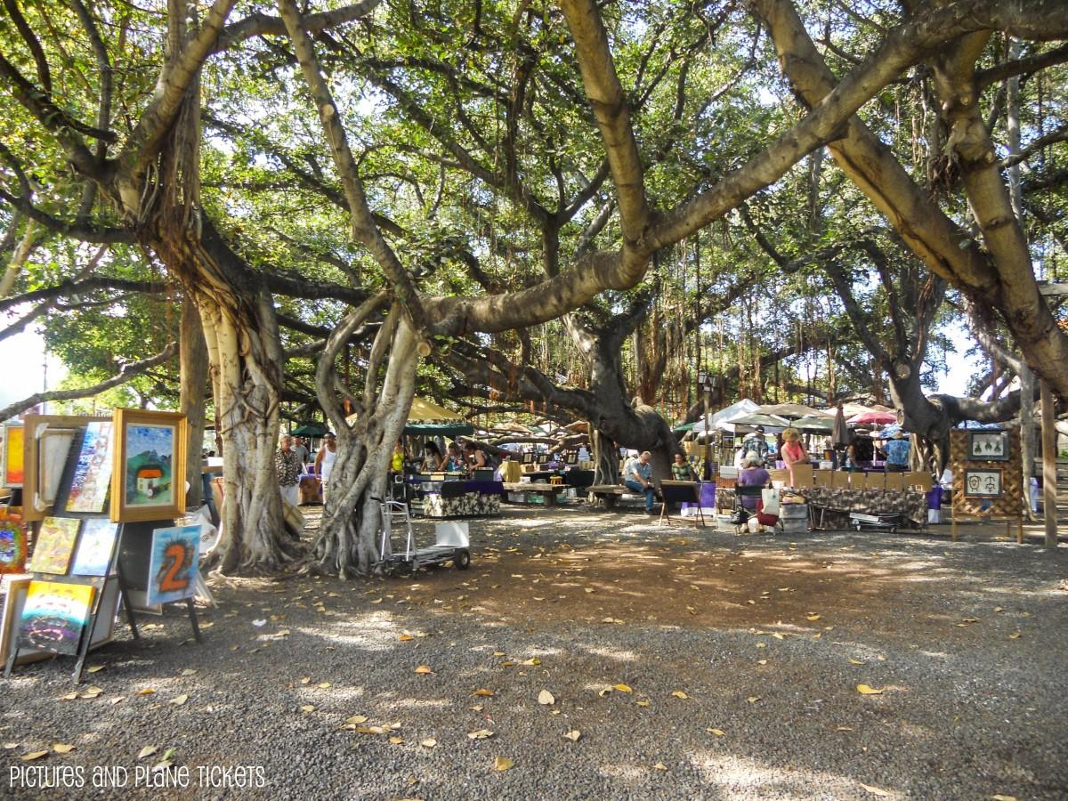 Lahaina-Banyan Tree
