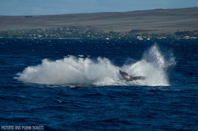 End of a Whale Breach