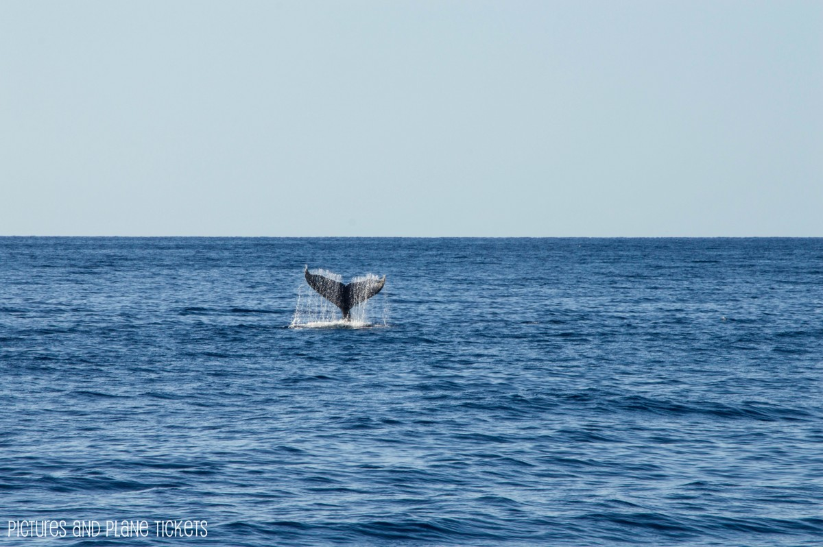 whale watching Schedule dolphin vii, dolphin viii, dolphin ix and dolphin x scheduled information for all trips are subject to weather conditions so please call for updated trip times.