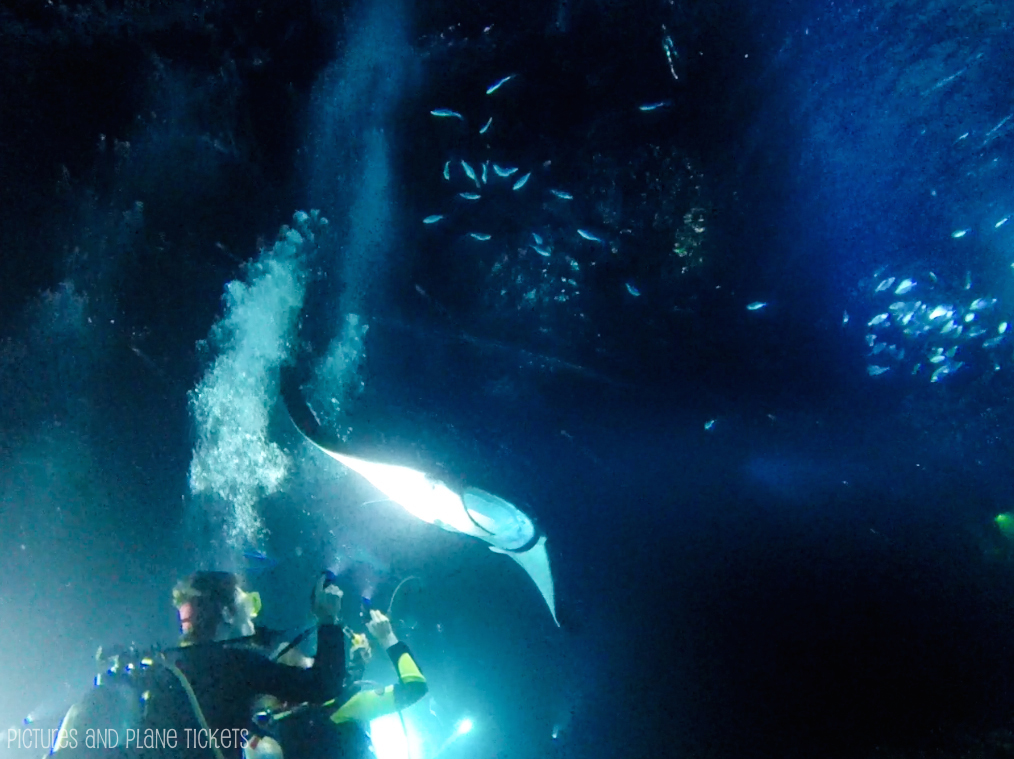 Manta Ray Night Dive 2