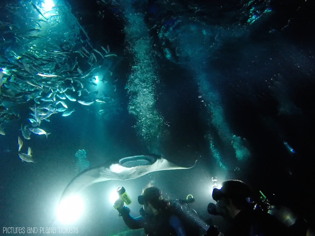 Manta Ray Night Dive 3