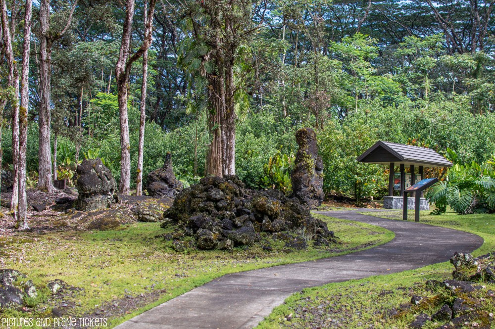 Lava Trees1-1