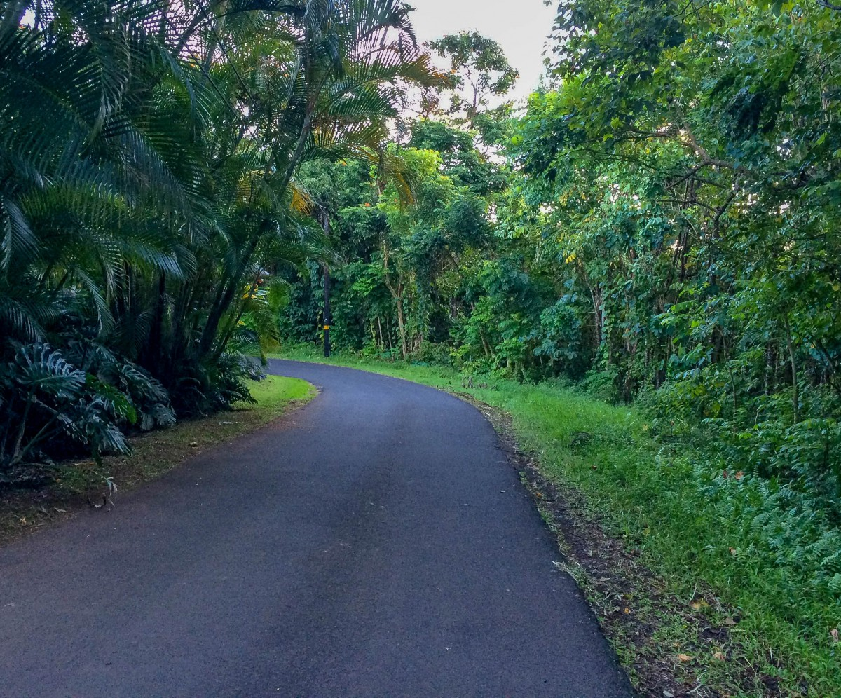 The road outside of the Nahiku Cottage... Welcome to the Jungle!