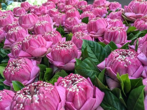 International Flower Market